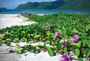 Tận hưởng cảm giác bình yên ở Côn Đảo