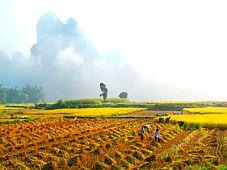 Tuyên Quang: Phê duyệt quy hoạch xây dựng Khu du lịch sinh thái Nà Hang