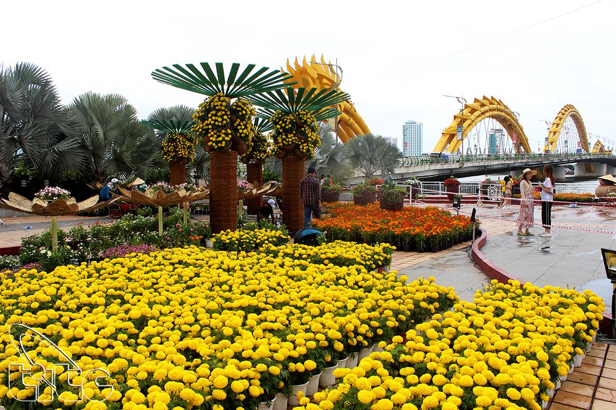 Đà Nẵng - Xuân Kỷ Hợi 2019 (Ảnh: Khánh Luân)