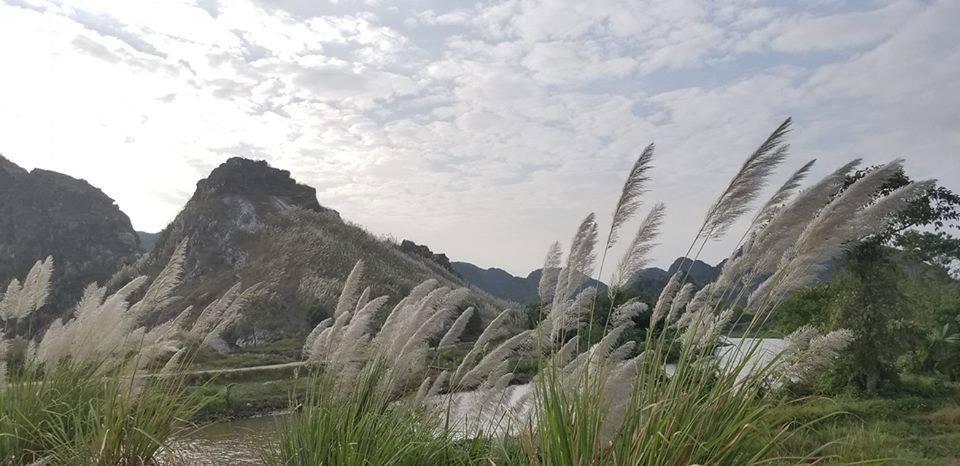 Khám phá Bái Đính (Ninh Bình) mùa lau trắng