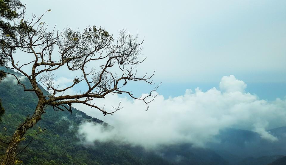 """Nghỉ Tết Nguyên đán: """"Săn"""" mây Tam Đảo, ngắm cải Mộc Châu"""