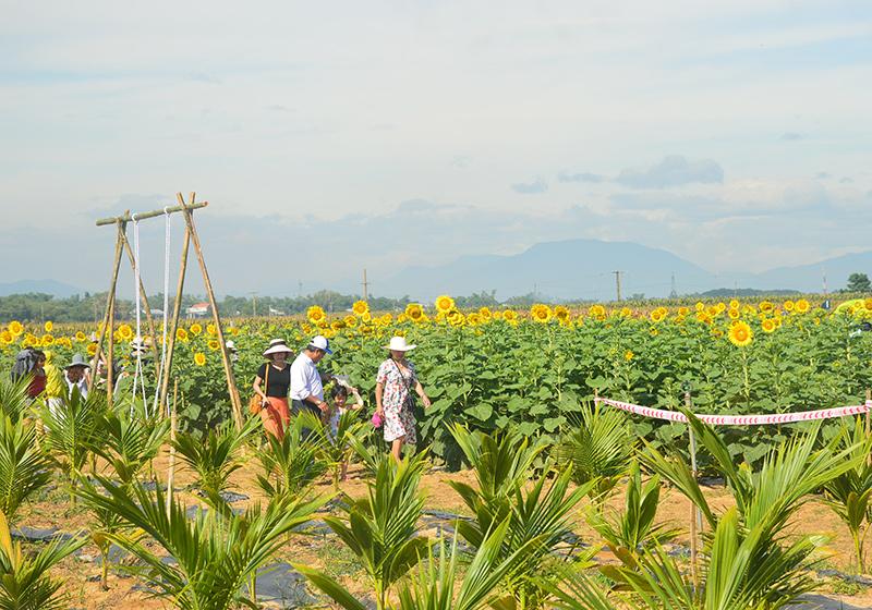 Quảng Nam: Chú trọng thị trường khách nội địa