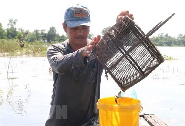 Trải nghiệm một ngày mùa nước nổi cùng ngư dân Đồng Tháp