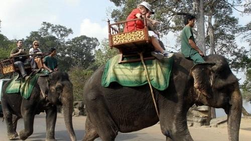 Campuchia cấm cưỡi voi ở Angkor Wat