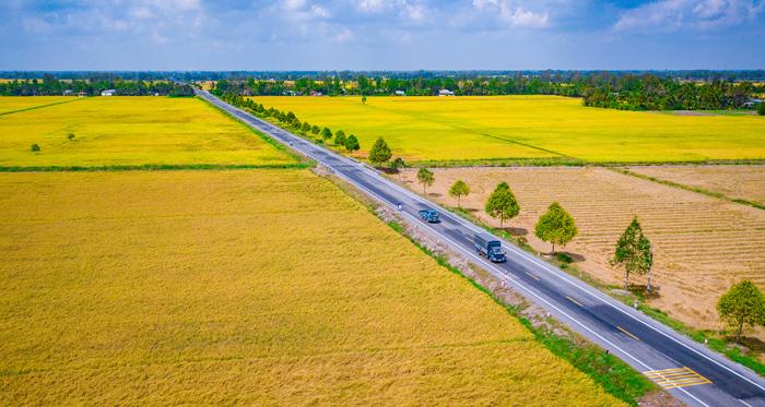 Chiêm ngưỡng cánh đồng lúa chín và cánh đồng khóm ở Hậu Giang
