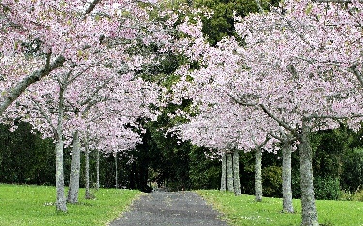 Khám phá New Zealand ngập sắc hoa
