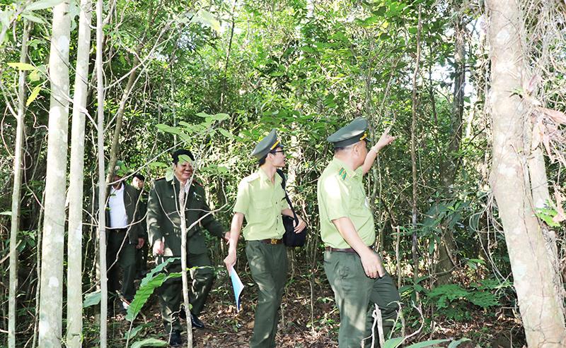 Cơ hội mới cho phát triển du lịch rừng Đồng Sơn - Kỳ Thượng (Quảng Ninh)