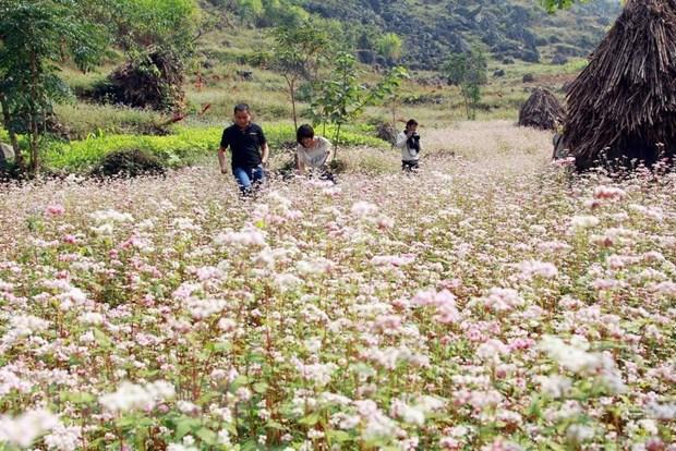 """Hà Giang khai mạc lễ hội hoa tam giác mạch """"Sắc hồng Cao nguyên đá"""""""