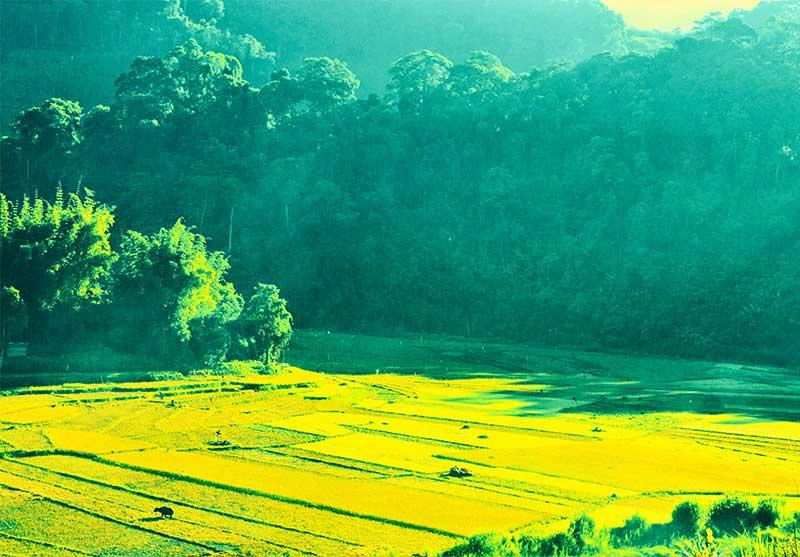 Chiêm ngưỡng vẻ đẹp trong veo A xan - Quảng Nam