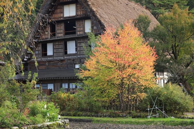 Làng Shirakawago (Nhật Bản) – vẻ đẹp yên bình
