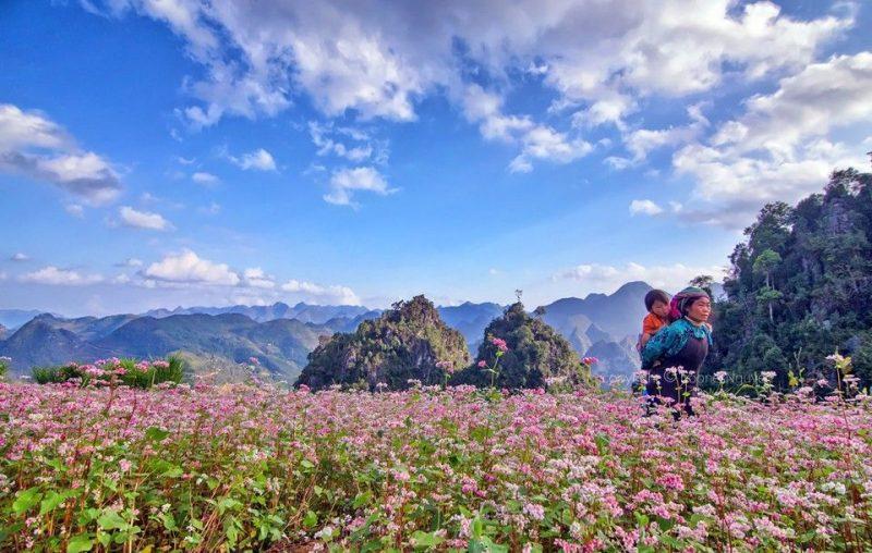 Đến với Lễ hội hoa tam giác mạch Hà Giang 2019 có gì hấp dẫn?