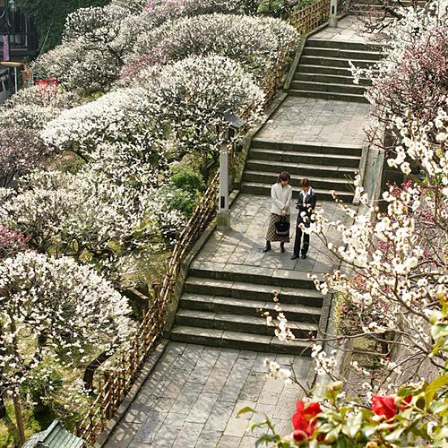 Khám phá 4 điểm ngắm hoa mơ đẹp ở Tokyo – Nhật Bản