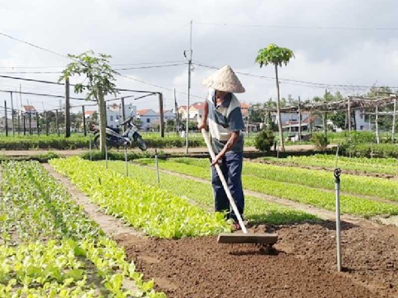 Hội An sắp khai trương điểm tham quan làng rau Trà Quế