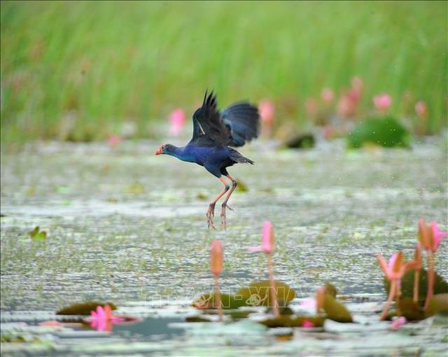 Khám phá mùa chim di trú trên đầm Vân Long – Ninh Bình