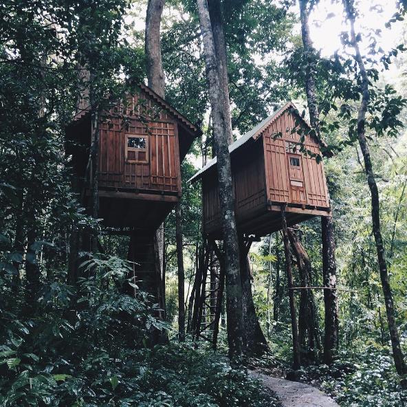 Trải nghiệm ngủ trên cây ở khu du lịch thác Dambri (Lâm Đồng)