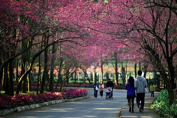 Thú vị 5 trải nghiệm mùa xuân ở Đài Loan
