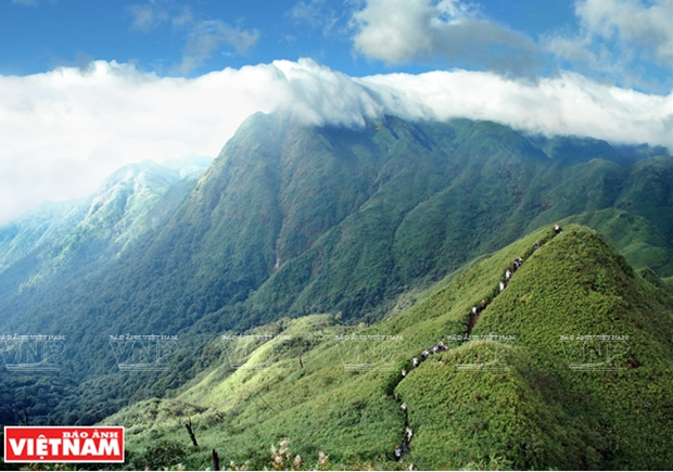 Vườn quốc gia Hoàng Liên Sơn - trung tâm đa dạng sinh học bậc nhất Việt Nam