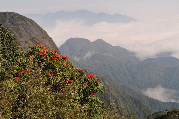 Leo núi khám phá vẻ đẹp rừng Hoàng Liên (Sa Pa) dịp đầu xuân