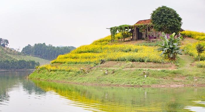 Đến Thái Nguyên ngắm xuân trên đảo hoa hồ Núi Cốc