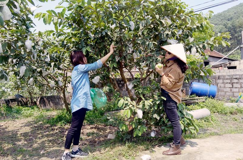 Hoành Bồ (Quảng Ninh) khuyến khích nông dân làm du lịch