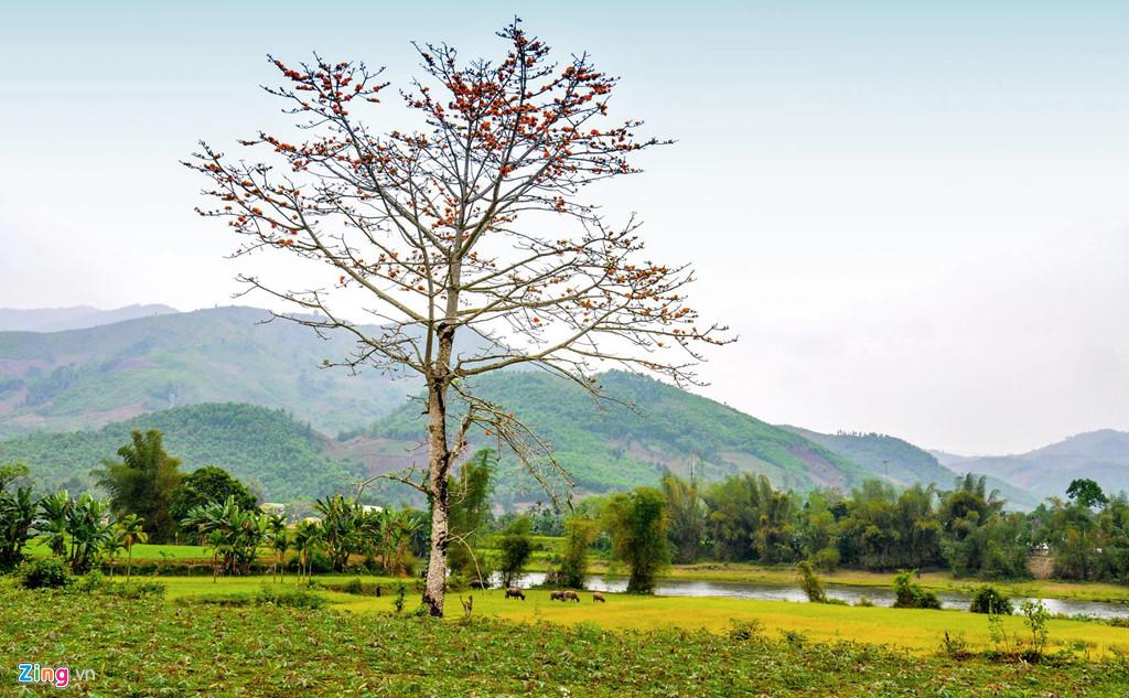 Tháng 3 về, ngắm Quảng Ngãi thay màu với cánh đồng bát ngát