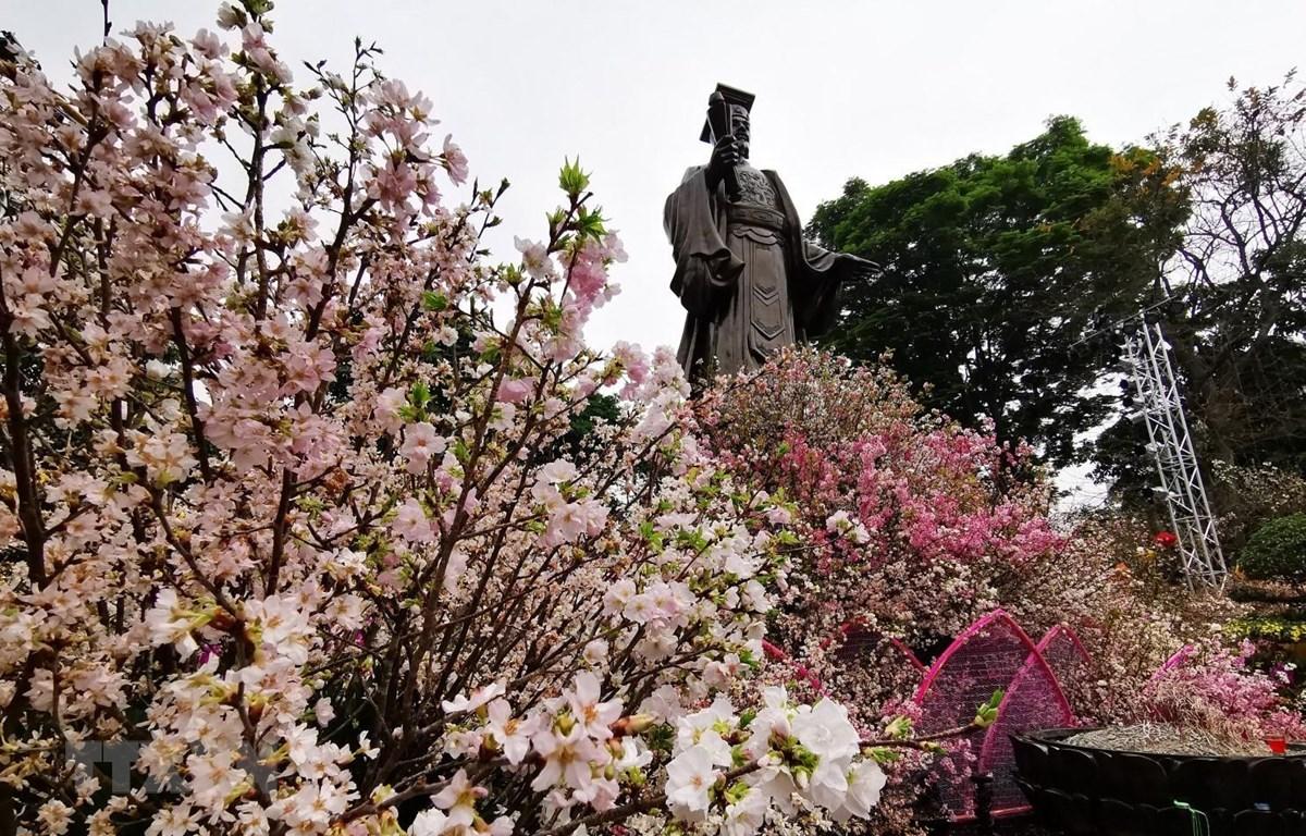Gần 30 nghìn cành hoa Anh đào khoe sắc giữa Thủ đô Hà Nội