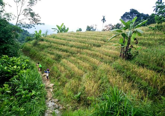 Quảng Nam: Gắn phát triển dược liệu với du lịch tại Nam Trà My