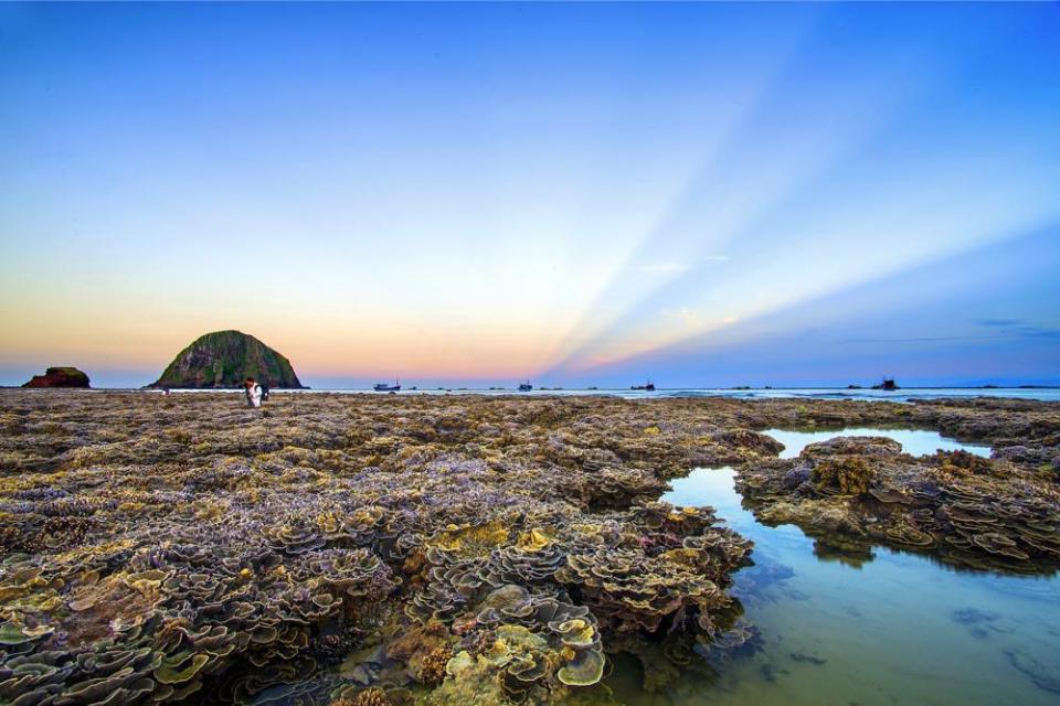 Thú vị ngắm san hô trên cạn đẹp ảo diệu tại Phú Yên