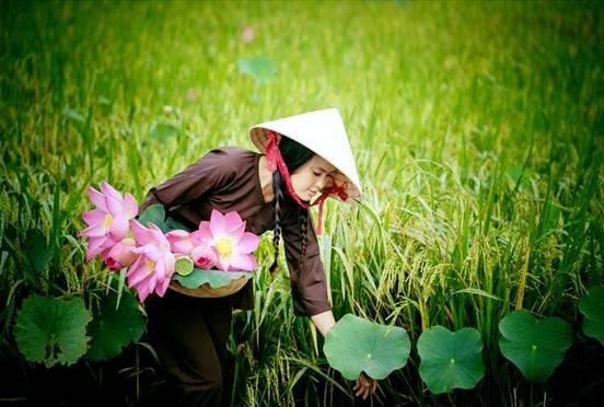 Về Mỹ Nghiệp thưởng thức trà cây Sen đặc sản của làng Chăm