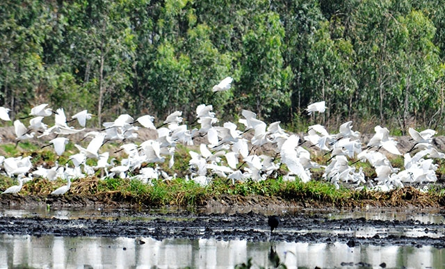 Khu bảo tồn đất ngập nước Láng Sen ( Long An) - Điểm đến thú vị