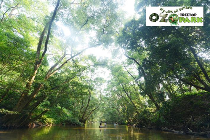 Khám phá công viên OZO – OZO Treetop Park