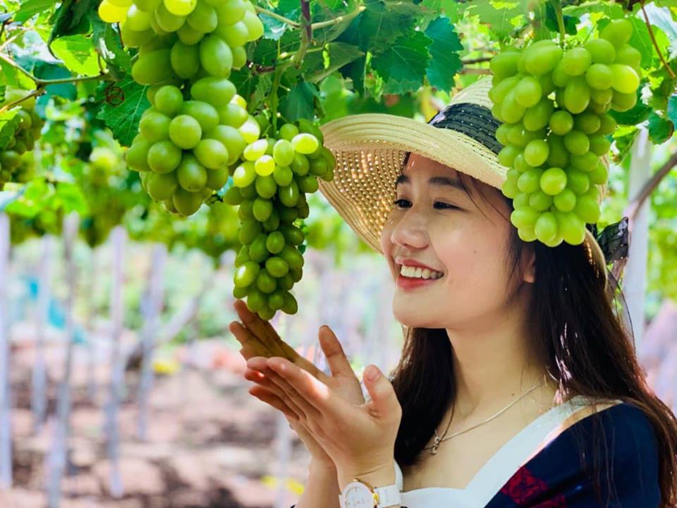 Trải nghiệm khó quên tại các vườn nho Ninh Thuận