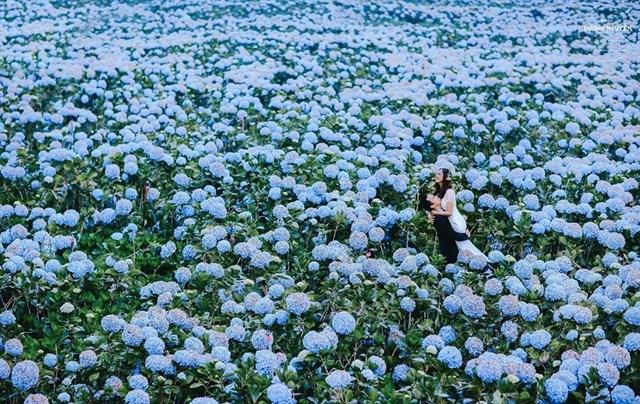 Chiêm ngưỡng những cánh đồng hoa đẹp ngất ngây ở Đà Lạt