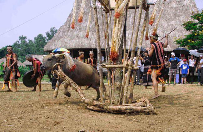 Tục đâm trâu mừng nhà rông mới của người Giẻ Triêng (Kon Tum)