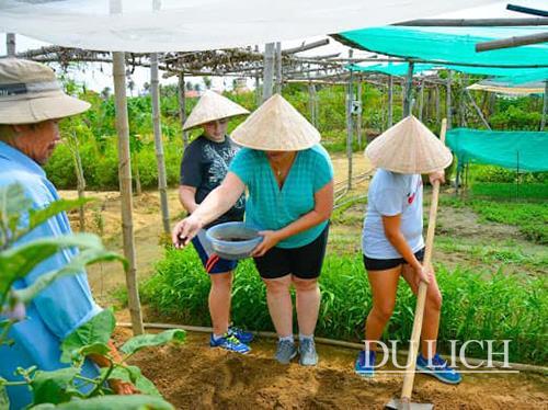Khám phá vườn rau hữu cơ Thanh Đông ở Quảng Nam