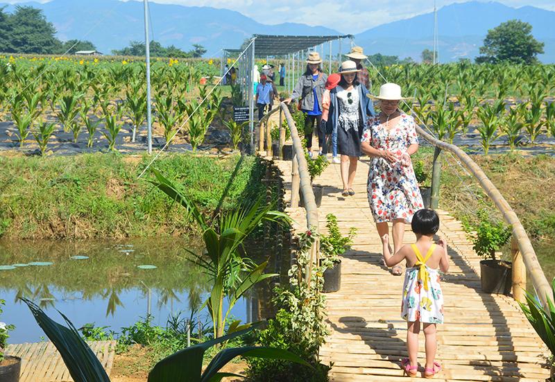 Quảng Nam: Thúc đẩy du lịch nông nghiệp