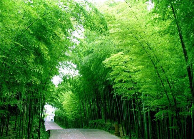 Điểm danh các loại cây nổi tiếng của Nga và Trung Quốc