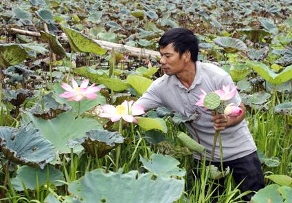 Hoa Lư (Ninh Bình) phát triển mô hình nông nghiệp gắn vớí phục vụ du lịch