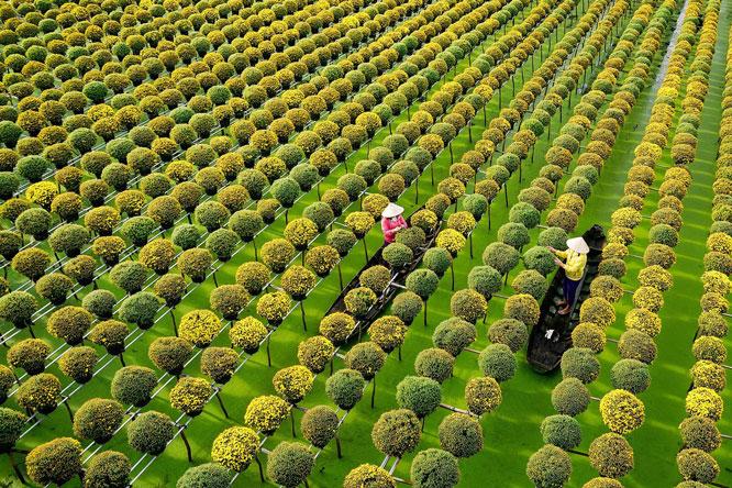 Sắc màu làng hoa Sa Đéc, Đồng Tháp