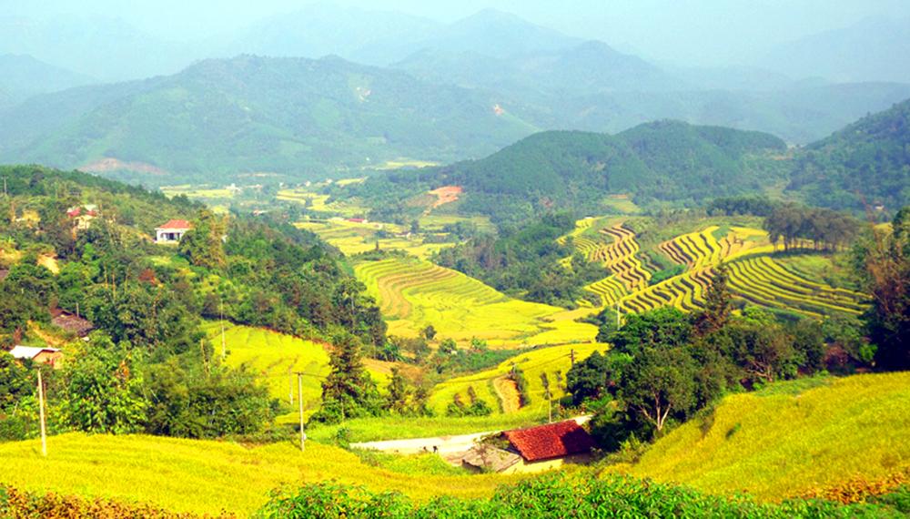 Lên Bình Liêu (Quảng Ninh) ngắm ruộng bậc thang mùa lúa chín
