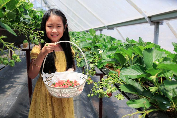 Lâm Đồng: Hướng đến mô hình Điểm du lịch canh nông độc đáo và bền vững