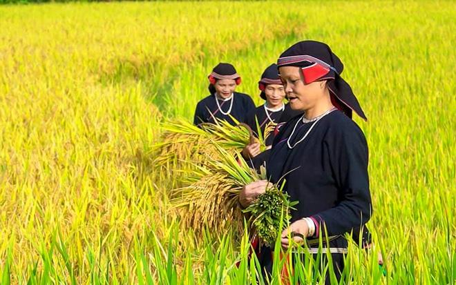 """Cao Đường - """"Sa Pa"""" của Hàm Yên (Tuyên Quang)"""