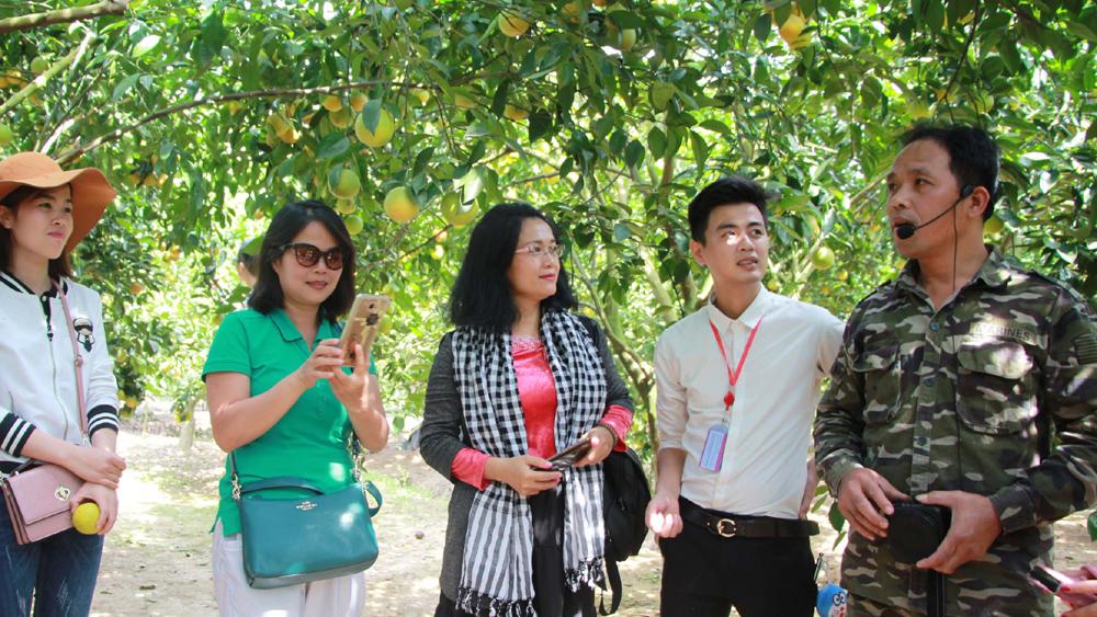 Nhiều du khách ngoài tỉnh tham quan Lục Ngạn (Bắc Giang) mùa cam, bưởi