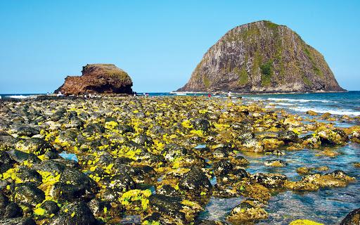 Phú Yên: Khởi động dự án bảo tồn quần thể rạn san hô Hòn Yến
