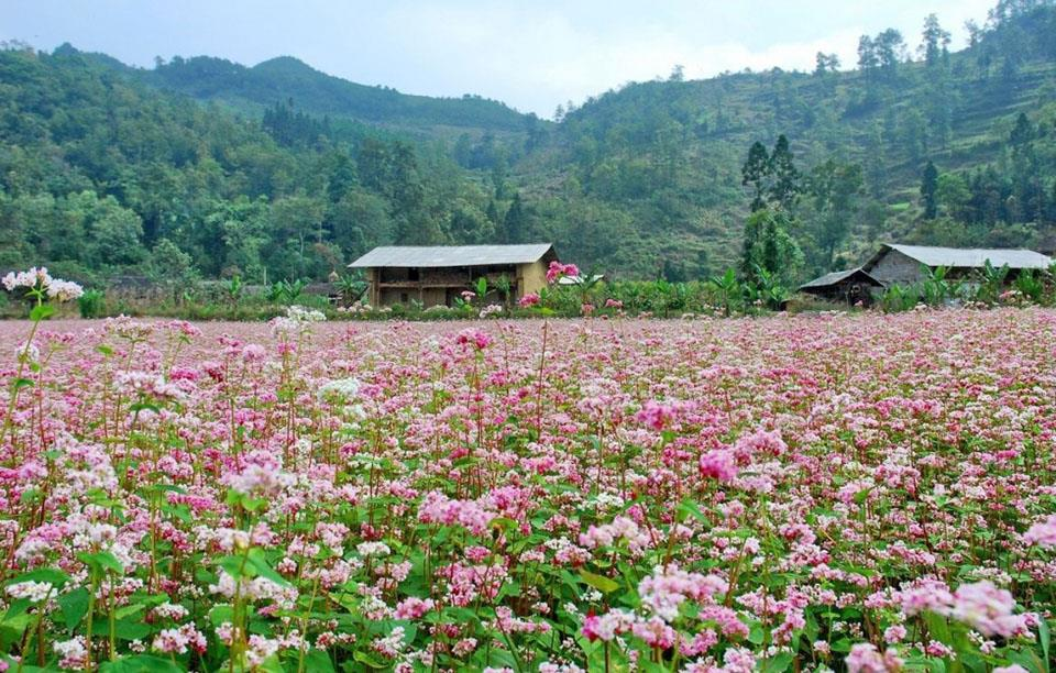Lễ hội hoa Tam giác mạch Hà Giang lần thứ VI với chủ đề
