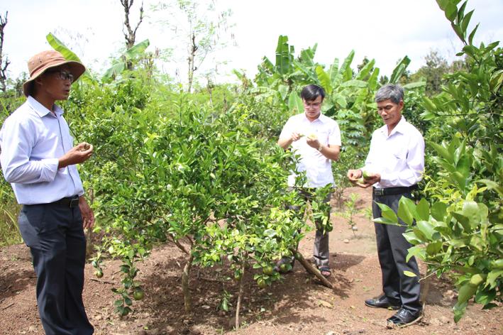 Huyện Buôn Đôn (Đắk Lắk): Phát triển nông nghiệp gắn với du lịch sinh thái