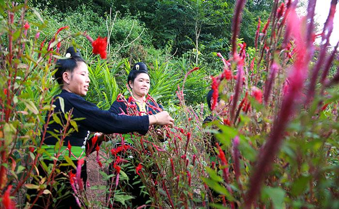 Độc đáo Tết Hoa của dân tộc Cống ở Lả Chà (tỉnh Điện Biên)