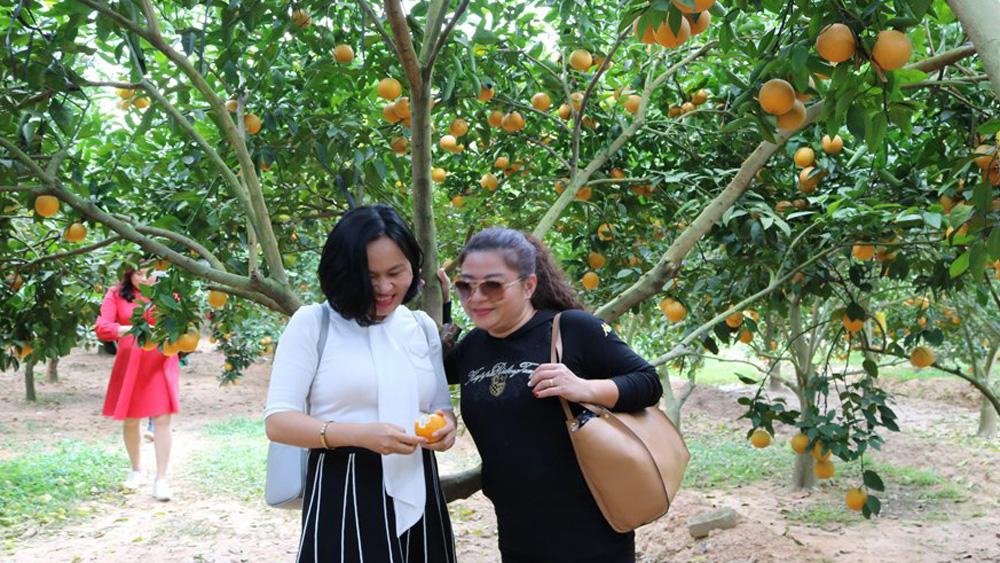 Bắc Giang: Nâng hiệu quả du lịch trải nghiệm mùa cam, bưởi