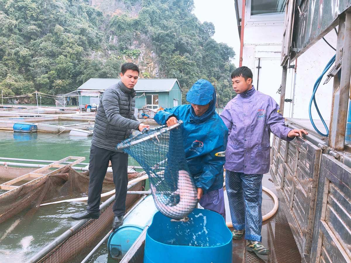 Ruốc cá - món quà hấp dẫn từ hồ Hòa Bình