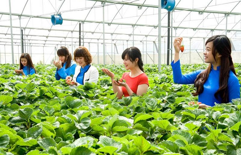 Lâm Đồng xây dựng bộ tiêu chí mới về du lịch canh nông